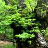 Árboles Singulares de Extremadura